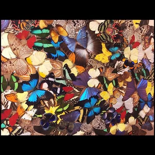 Table 24- Catalaga