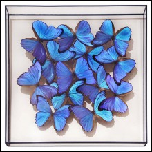 Frame with natural butterflies PC-Morphos Butterflies Medium