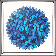 Wall Decoration with Morphos butterflies from Peru PC-Butterflies Morphos