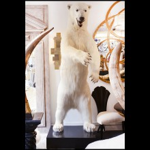 Ours polaire naturalisé travail exceptionnel PC-Polar Bear