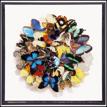 Wall Decoration under glass box frame PC-Butterflies Multicolors Medium