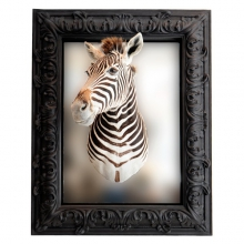 Mirror with real zebra head PC-Zebre