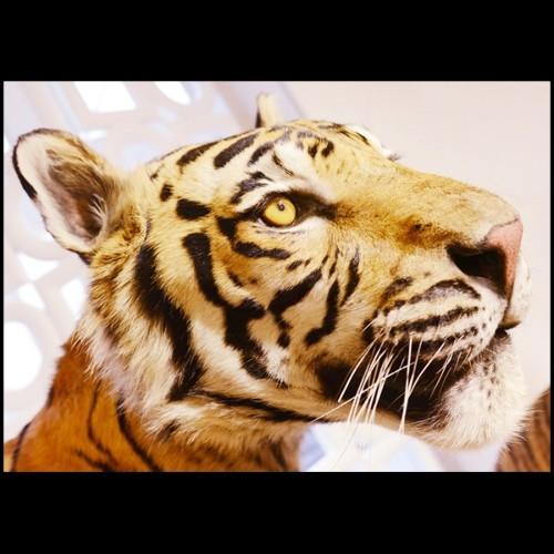 Table basse avec socle racines de bois en fibre de verre 114-WOOD